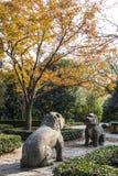 Cenário de pedra do outono da estrada do elefante Foto de Stock Royalty Free