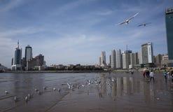 Cenário de Qingdao foto de stock royalty free