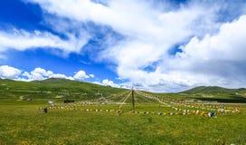 Cenário de Qinghai imagem de stock