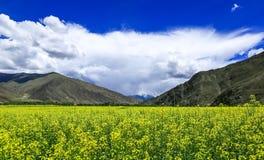 Cenário de Tibet fotografia de stock