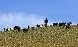 Cenário de Tibet foto de stock royalty free