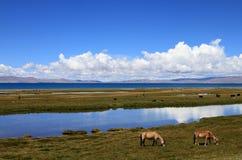 Cenário de Tibets Fotos de Stock Royalty Free