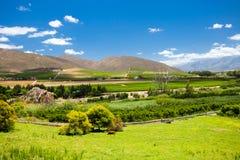 Cenário de Winelands Imagens de Stock Royalty Free