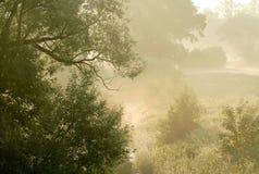Cenário do amanhecer com as árvores na névoa fotos de stock royalty free