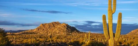 Cenário do deserto do Arizona Lanscape com cacto do Saguaro imagem de stock