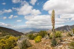Cenário do deserto no parque de estado do deserto de Anza-Borrego Fotografia de Stock