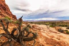 Cenário do deserto do parque nacional dos arcos no outono Fotografia de Stock Royalty Free