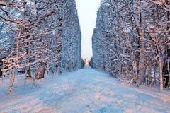Cenário do inverno do parque nevado em Gdansk Fotografia de Stock