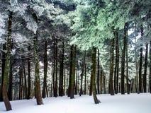 Cenário do inverno em Grécia do sul Imagem de Stock Royalty Free