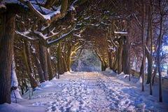 Cenário do inverno no parque nevado de Gdansk Fotos de Stock Royalty Free