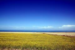 Cenário do lago Qinghai Imagens de Stock Royalty Free