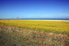 Cenário do lago Qinghai Fotografia de Stock Royalty Free