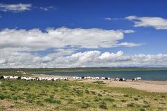 Cenário do lago summer Imagem de Stock Royalty Free