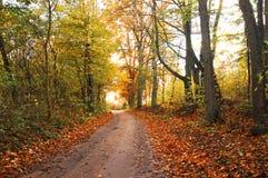 Cenário do outono Fotos de Stock Royalty Free
