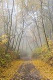 Cenário do outono Fotos de Stock