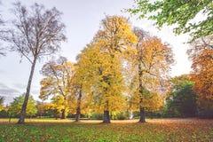 Cenário do outono com as árvores amarelas coloridas fotografia de stock