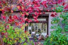 Cenário do outono de Vyborg, Rússia Fotos de Stock Royalty Free