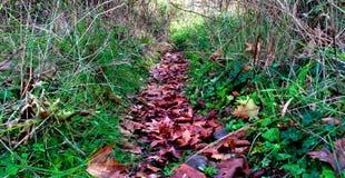 Cenário do outono em uma floresta do Arcadia em Grécia Imagens de Stock