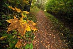 Cenário do outono, fim acima nas folhas Imagens de Stock