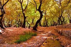 Cenário do outono na floresta Foto de Stock