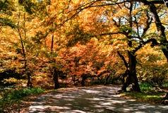 Cenário do outono na floresta Fotos de Stock