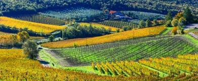 Cenário do outono - vinhedos bonitos de Toscânia, Itália imagem de stock