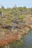 Cenário do pântano Foto de Stock