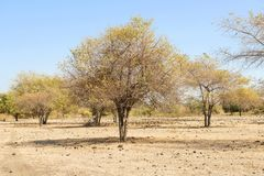 Cenário do savana em Doro Ncanga imagem de stock royalty free