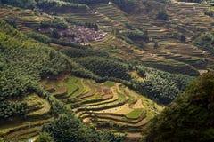 Cenário do terraço de Lishui Fotos de Stock