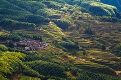 Cenário do terraço de Lishui Imagens de Stock Royalty Free