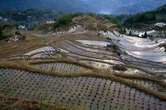 Cenário do terraço de Lishui Foto de Stock