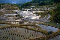 Cenário do terraço de Lishui Fotografia de Stock