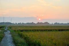 Cenário dos campos de almofada no tempo do nascer do sol Foto de Stock