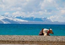 Cenário em Tibet Imagem de Stock