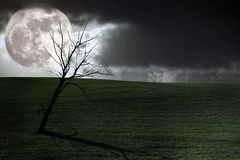 Cenário escuro Foto de Stock Royalty Free
