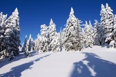 Cenário invernal da paisagem Fotos de Stock Royalty Free