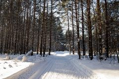Cenário invernal da paisagem com maneira do esqui Imagem de Stock
