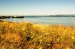 Cenário litoral Fotos de Stock Royalty Free