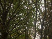 Cenário luxúria bonito da parte superior da árvore na OU da queda das folhas das cores do outono Imagens de Stock Royalty Free