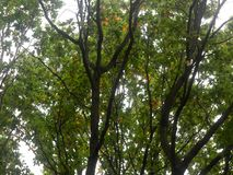 Cenário luxúria bonito da parte superior da árvore na OU da queda das folhas das cores do outono Foto de Stock Royalty Free