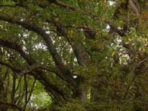 Cenário luxúria bonito da parte superior da árvore na OU da queda das folhas das cores do outono Imagem de Stock Royalty Free
