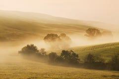 Cenário morno do outono ou do verão em uma floresta com o sol que molda raios de luz bonitos através da névoa e das árvores fotografia de stock