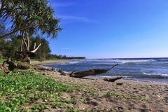 cenário na praia natural Fotografia de Stock Royalty Free