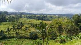 Cenário natural do campo do arroz no jatiluwih imagens de stock