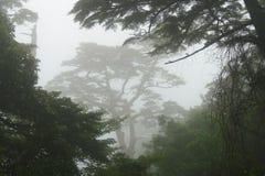 Cenário nevoento com as silhuetas das árvores na caminhada até montanhas do kogen de Ebino, Kyushu, Japão foto de stock royalty free