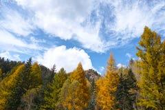 Cenário outonal da floresta Imagem de Stock