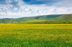Cenário pastoral do verão fotografia de stock