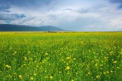 Cenário pastoral do verão foto de stock