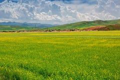 Cenário pastoral do verão Fotografia de Stock Royalty Free