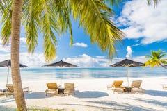 Cenário perfeito da praia Cadeiras de plataforma e guarda-chuva de sol e palmeiras e mar azul Imagem de Stock